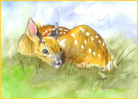 Golden Fox Deer Fawn 72 dpi