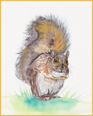 Golden Fox Squirrel 72 dpi